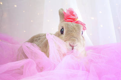 Photograph - Pretty Bunny by Jeanette Fellows