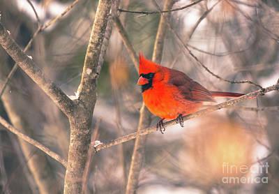 Photograph - Pretty Cardinal by Cheryl Baxter