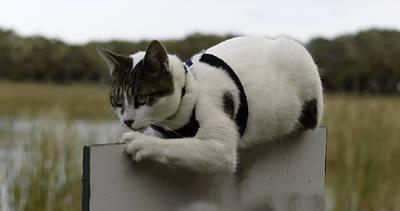 Photograph - Pretty Cat On Edge by Leticia Latocki