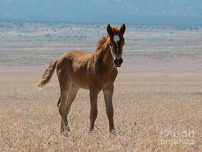 Photograph - Pretty Colt by Nicole Markmann Nelson