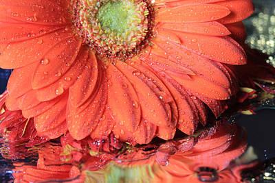 Photograph - Pretty Daisy by Angela Murdock