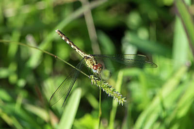 Photograph - Pretty Dragonfly Face by William Tasker