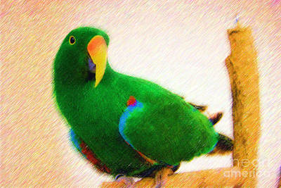 Digital Art - Pretty Eclectus Parrot by Jill Lang