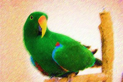 Digital Art - Pretty Eclectus Parrot by Jill Lang