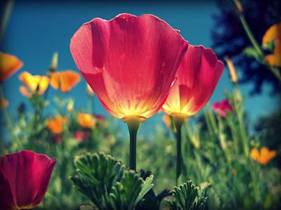 Photograph - Pretty Flowers by Dan Gildor