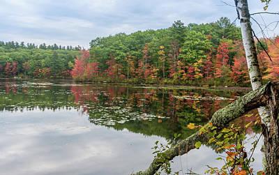 Photograph - Pretty Foliage by Jane Luxton