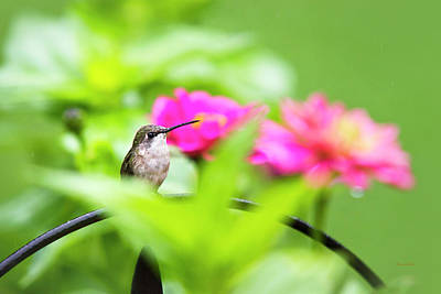 Photograph - Pretty Garden Jewel by Christina Rollo
