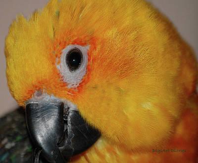 Yellow Beak Digital Art - Pretty Girl by DigiArt Diaries by Vicky B Fuller