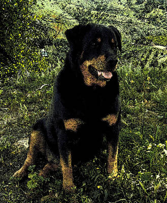 Rotty Photograph - Pretty Girl by Jessica B