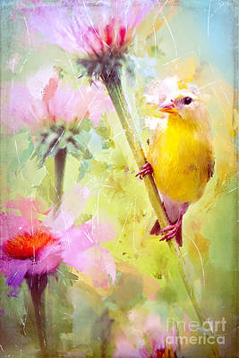 Photograph - Pretty Goldfinch by Tina LeCour
