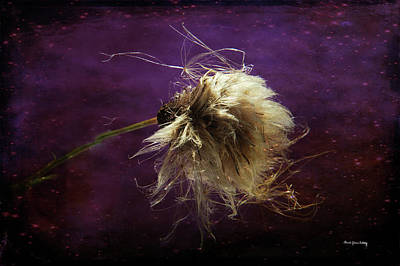 Photograph - Pretty Hairy by Randi Grace Nilsberg
