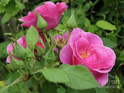 Photograph - Pretty In Pink #3 by Kim Tran