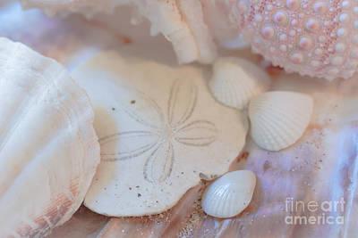 Photograph - Pretty In Pink by Ana V Ramirez