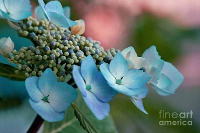 Photograph - Pretty In Pink And Blue by Patricia Strand