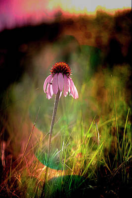 Photograph - Pretty In Pink by Annette Berglund