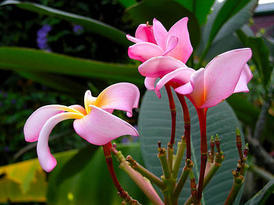 Photograph - Pretty In Pink by Brian Hoover