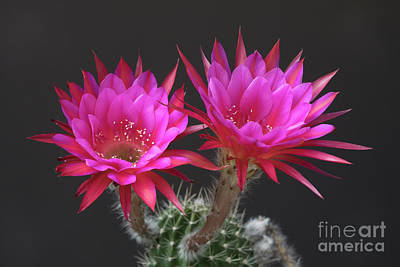 Photograph - Pretty In Pink by Bryan Keil