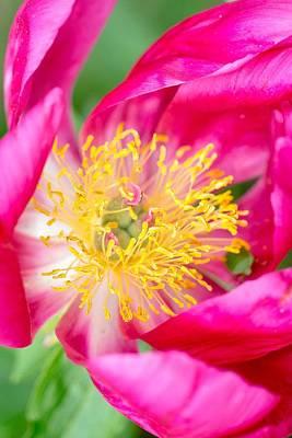Photograph - Pretty In Pink by Deb Buchanan