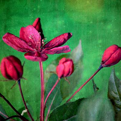 Mixed Media - Pretty In Pink by Diane Paquin