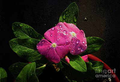 Art Print featuring the photograph Pretty In Pink by Douglas Stucky