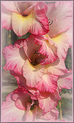 Photograph - Pretty In Pink - Gladiola by Dora Sofia Caputo Photographic Design and Fine Art