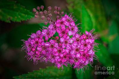 Photograph - Pretty In Pink by Grace Grogan