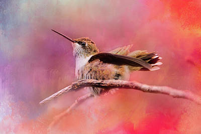 Pretty In Pink Hummingbird Art Print by Jai Johnson