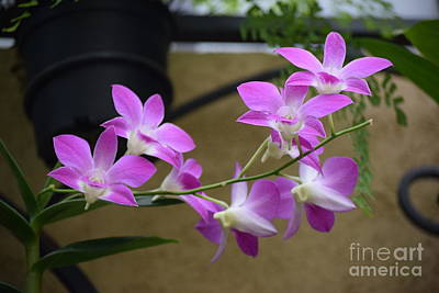Photograph - Pretty In Pink by Jeannie Rhode