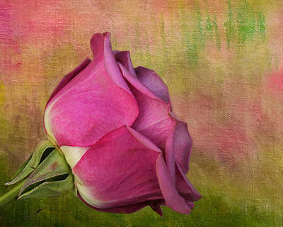 Photograph - Pretty In Pink by Judy Vincent