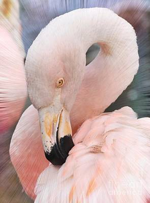 Photograph - Pretty In Pink by Kathy Baccari