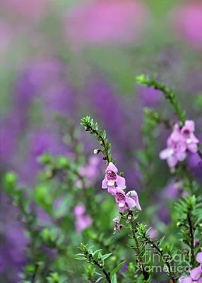 Florida Florals Photograph - Pretty In Pink N Purple by Sabrina L Ryan