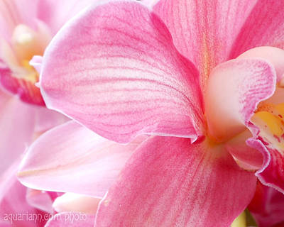 Photograph - Pretty In Pink Orchid Petals by Kristin Aquariann