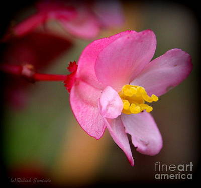 Photograph - Pretty In Pink by Rabiah Seminole