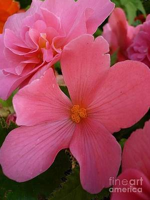 Photograph - Pretty In Pink by 'REA' Gallery