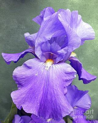 Abstract Water - Pretty in Purple - Bearded Iris by Cindy Treger
