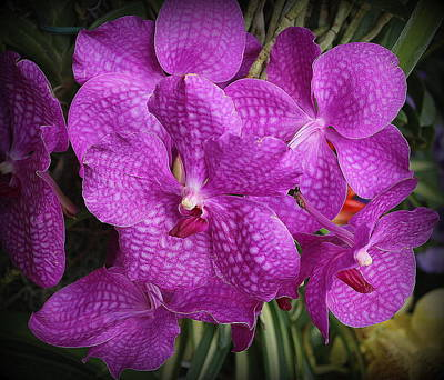 Photograph - Pretty In Purple - Orchids by Dora Sofia Caputo Photographic Art and Design