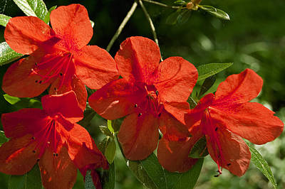 Flowers Photograph - Pretty In Red by Gary Adkins