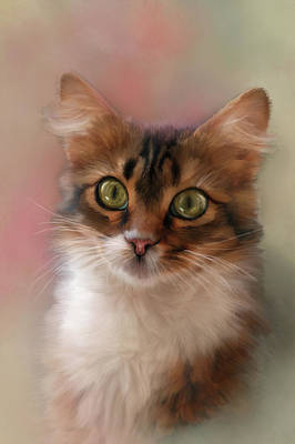 Photograph - Pretty Kitty by Mary Timman