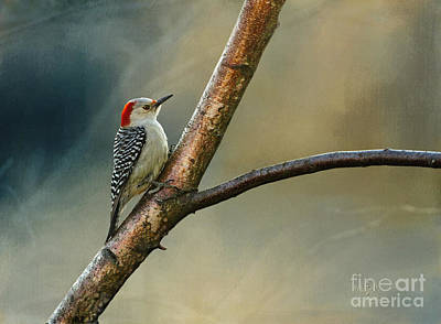 Red Bellied Woodpecker Photograph - Pretty Lady by Lois Bryan