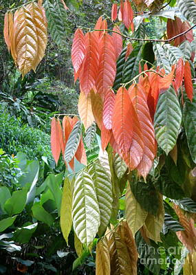 Photograph - Pretty Leaves by Randall Weidner