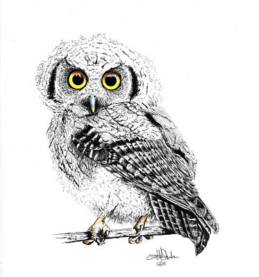 Visual Creations Painting - Pretty Little Owl by Isabel Salvador