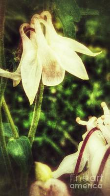 Photograph - Pretty Maids by Isabella F Abbie Shores FRSA