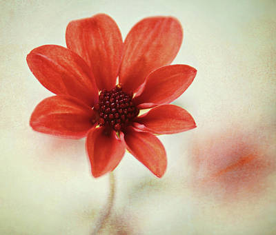 Focus On Foreground Photograph - Pretty Orange Flower by Captured by Karen photography