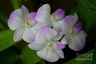 Photograph - Pretty Orchids by Jeannie Rhode