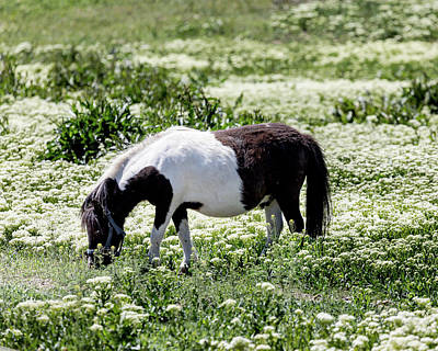 Photograph - Pretty Painted Pony by James BO Insogna