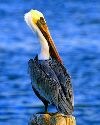 Photograph - Pretty Pelican On Piliing by David Lee Thompson