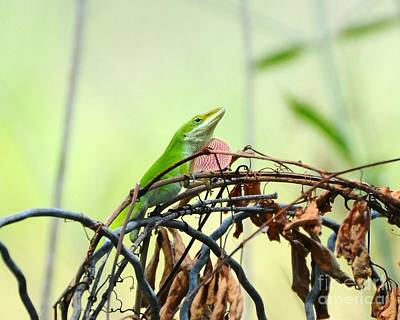 Brown Anole Photograph - Pretty Penny 1 by Al Powell Photography USA