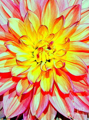 Photograph - Pretty Petals by Ed Weidman