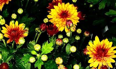 Pretty Petals Art Print by Marsha Heiken