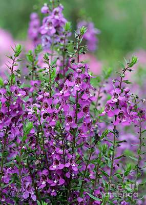 Photograph - Pretty Pink And Purple Flowers by Sabrina L Ryan
